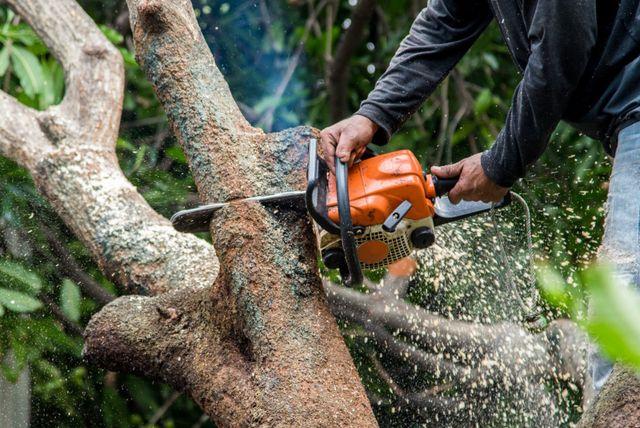 Arborland Tree Service
