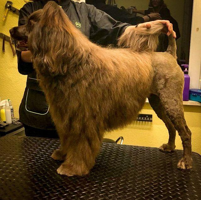 Sarahs Hundepflegesalon Über mich