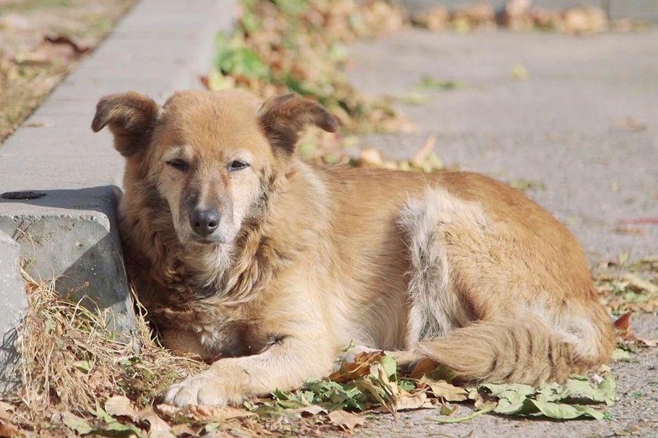 Tierische Mitbewohner - das Leben mit einem «Haustier»