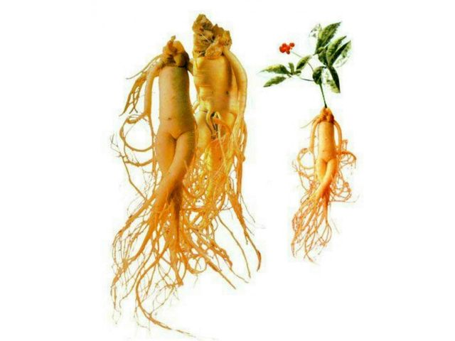 dieta chetogenica e sistema immunitario