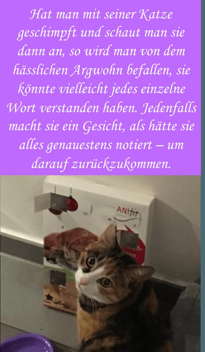 Katze geburtstagssprüche Geburtstagswünsche Lustig