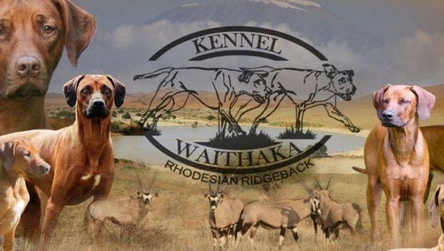 Unsere Hunde, Kennelbanner, Kennel Waithaka, Rhodesian Ridgeback