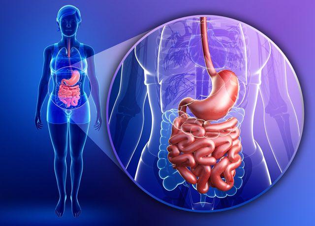 Cómo Afecta la Salud Intestinal a Todo el Cuerpo