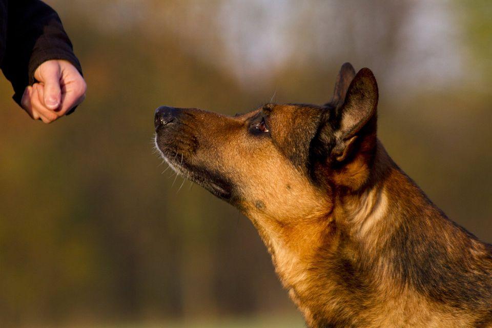 Muss ich der Nabel der Welt für meinen Hund sein?
