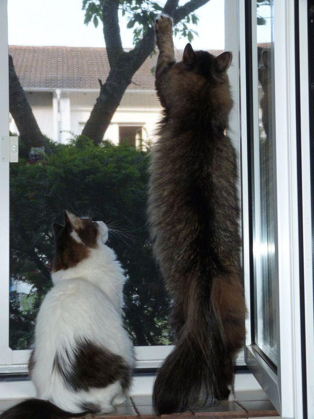 Hier können ihre Katzen richtig die Natur geniesen