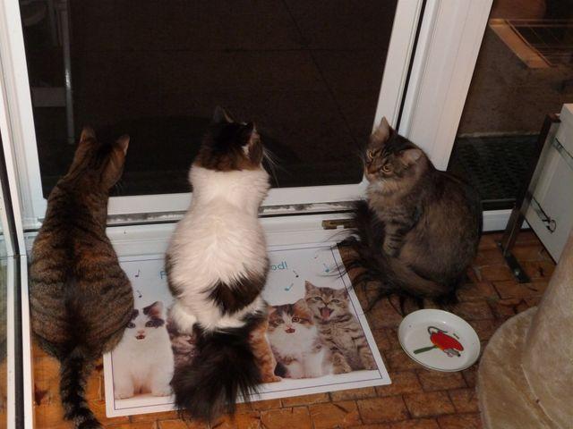 Der richtige Babysitter für ihre Katzen !