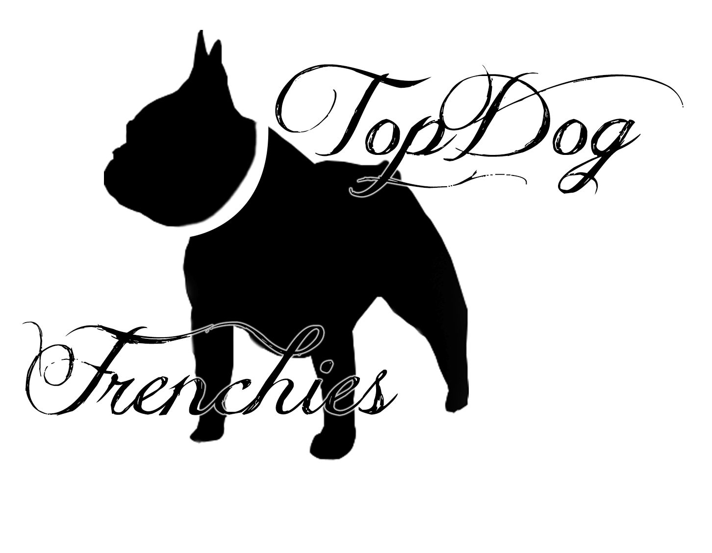 French Bulldog Puppies For Sale Frenchie Puppy Topdogfrenchbulldogs