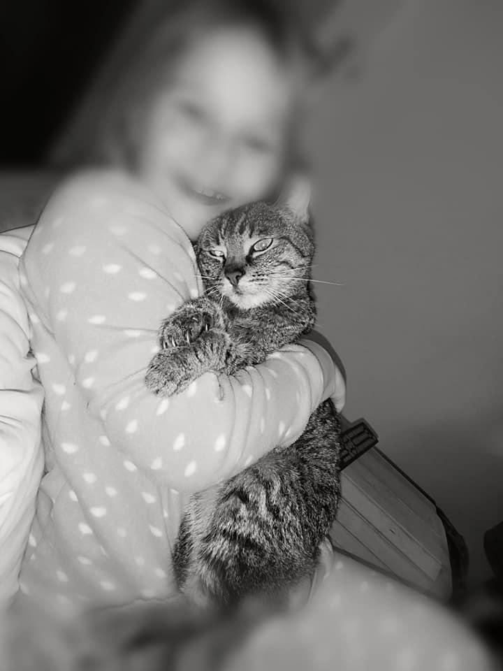 Neue katze kennenlernen