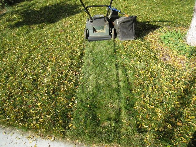 Mower collecting leaves