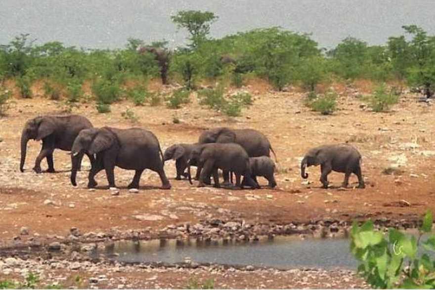 elefant geschwindigkeit
