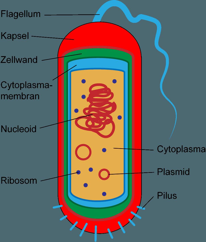 Aufbau einer Zelle