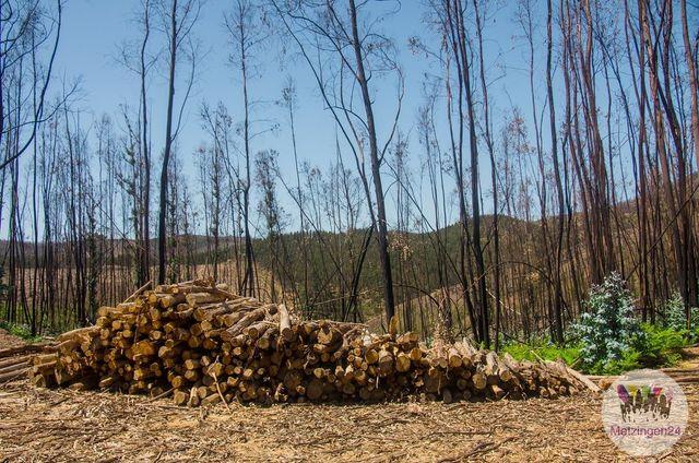 Holzverkauf Durch Die Stadt Metzingen