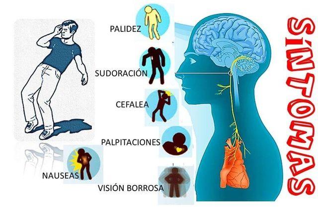 thaumetopoea pityocampa sintomas de diabetes