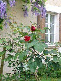 Yannick cadiou vigneron chablis en conversion bio - Il faut cultiver notre jardin analyse ...