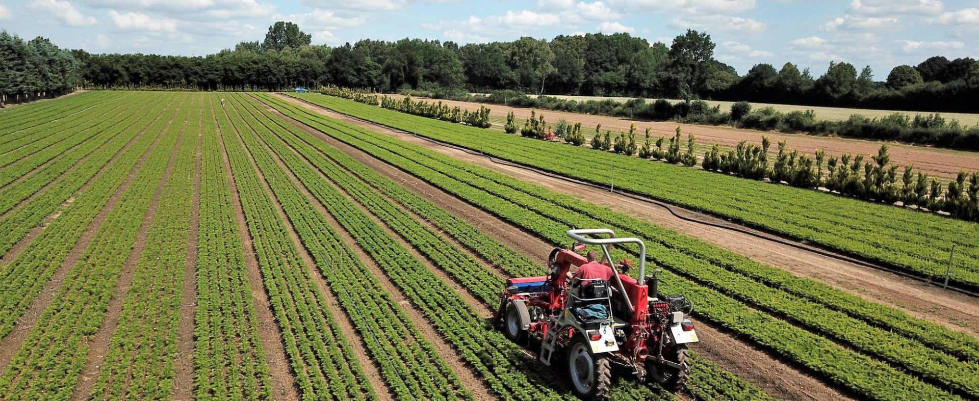 Die Baumschule Engler vermarktet jährlich mehr als 3 Millionen Jungpflanzen