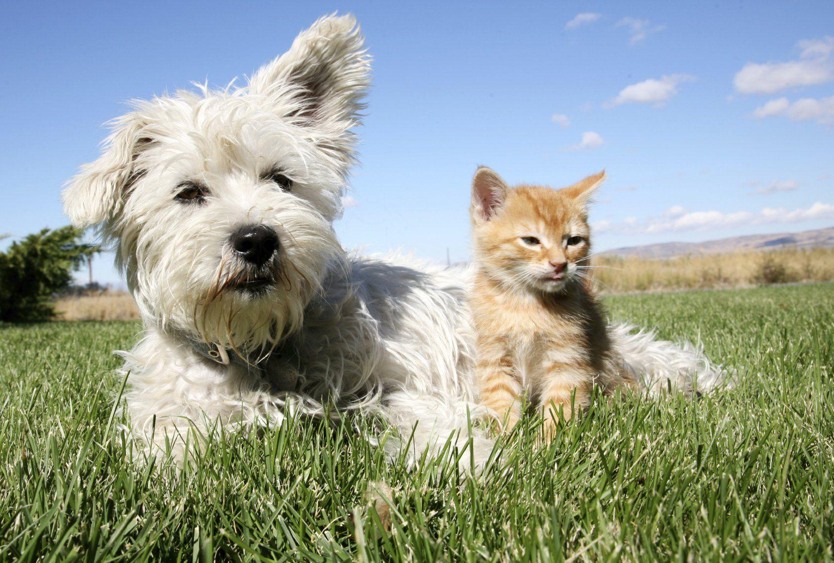 Home sitting, garde animaux à domicile par retraités