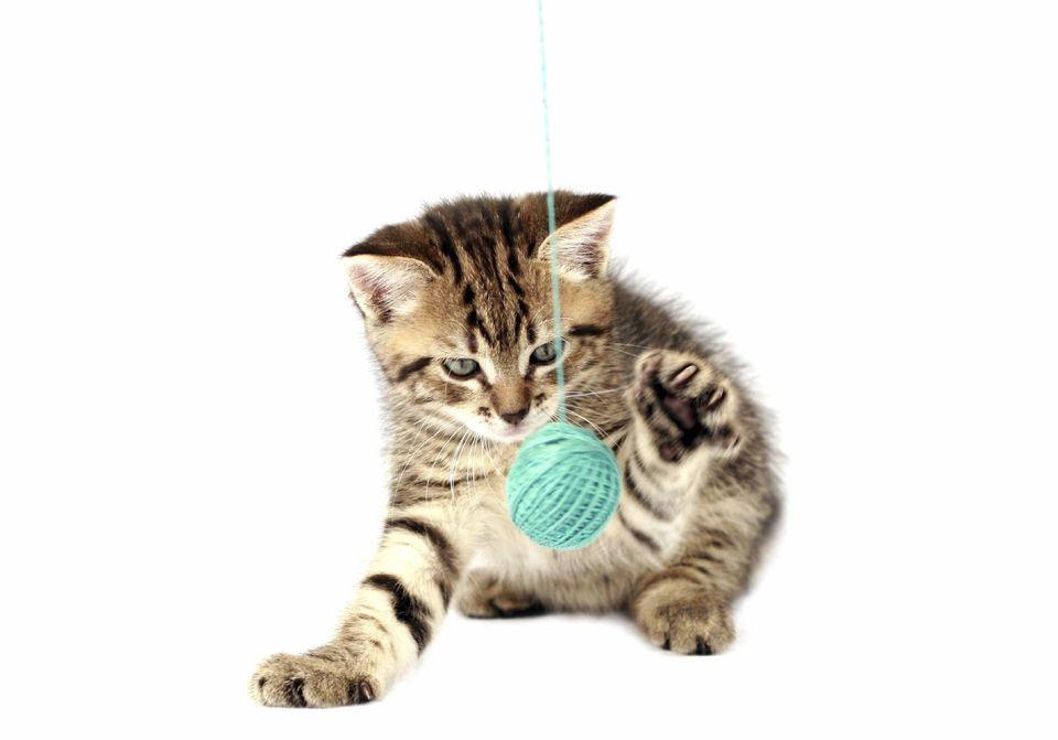 Spiele Mit Katzen